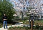 Video Screen Shots>spring_flowering_trees_in_garden.jpg