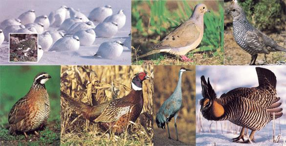 WOEM Upland GB Study Guide>Group Image - Upland Gamebirds